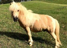 Horses/Ponies - Dallas image
