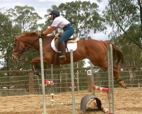 Horses/Ponies - Gigit 1 image