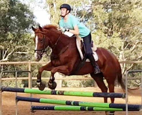 Horses/Ponies - Gigit1 2 image