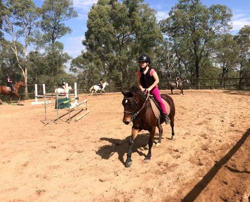 Horses/Ponies - Nikita2 image