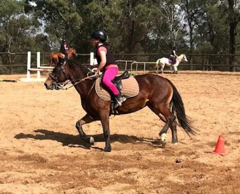 Horses/Ponies - Nikita3 image