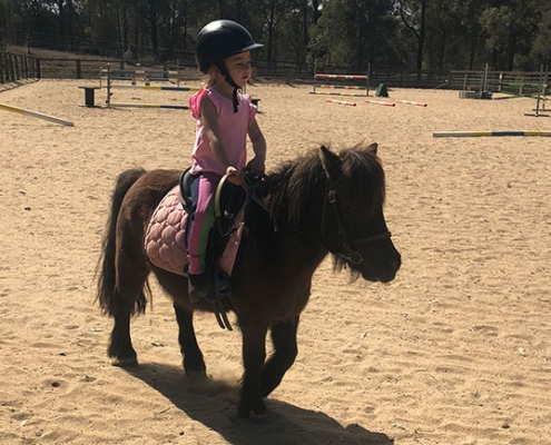 Horses/Ponies - Sheriff image