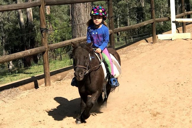 Horses/Ponies - Sheriff2 1 image