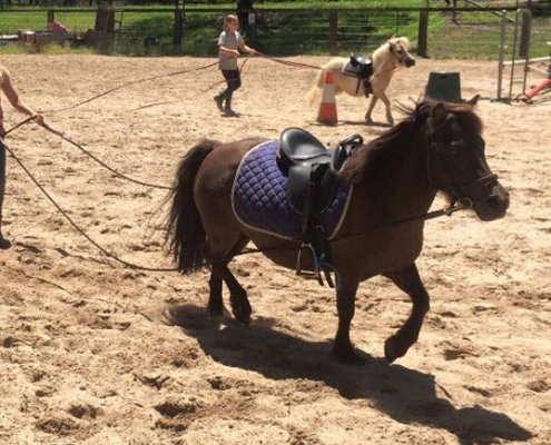 Horses/Ponies - Sheriff2 image