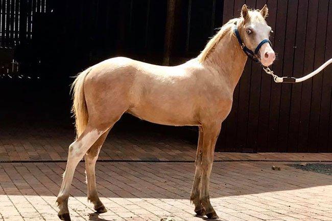Horses/Ponies - Surprise image