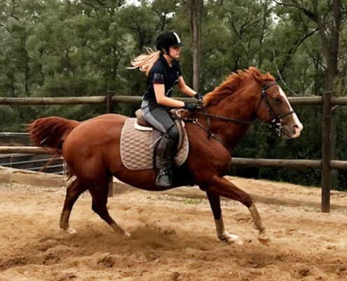 Horses/Ponies - cindy3 image