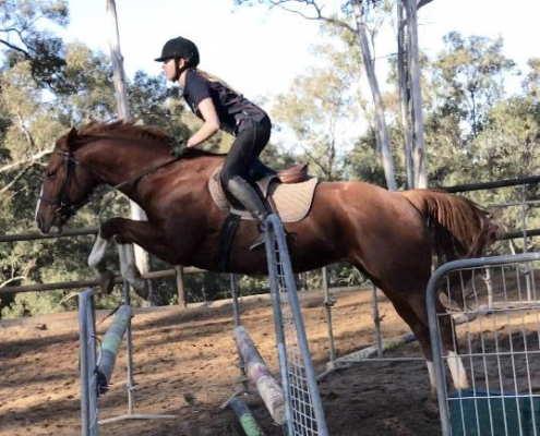 Horses/Ponies - Cindy image