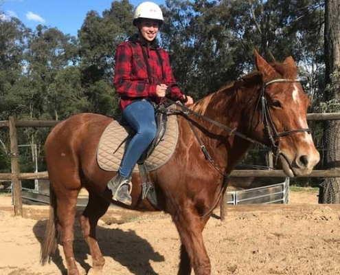 Horses/Ponies - TT Bailey image