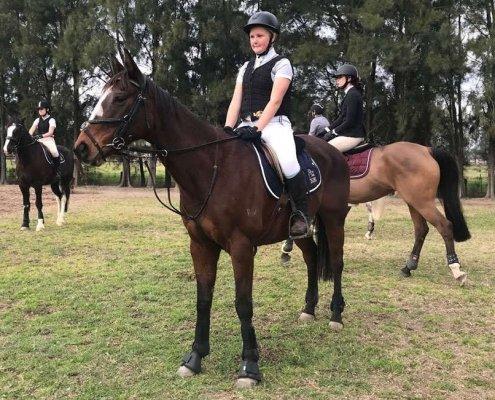 Past Horses/Ponies - Breeze image