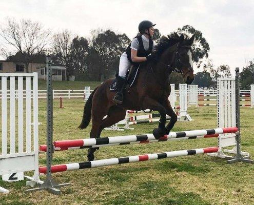 Past Horses/Ponies - Breeze2 image
