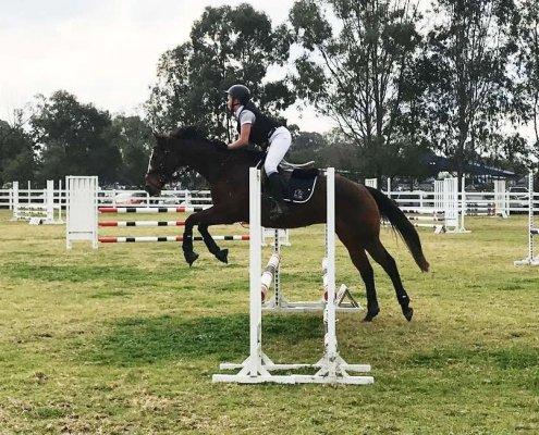 Past Horses/Ponies - Breeze3 image