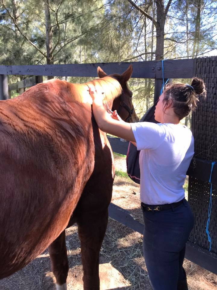 Full spa treatment for the Tic Toc horses today, they all look stunning - Full spa treatment for the Tic Toc horses today image