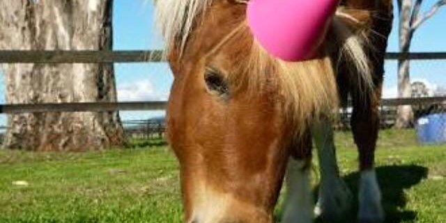 Happy birthday to all the horses