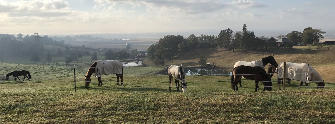 Home - Horses in Paddock 1 image