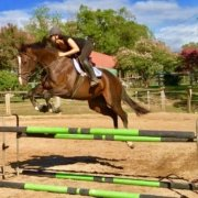 Jumping is just amazing!! Great session this morning for TT Darling, back into s