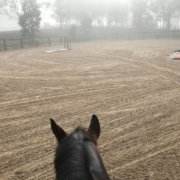 Riding on a freshly graded arena... amazing! Darling loved it too