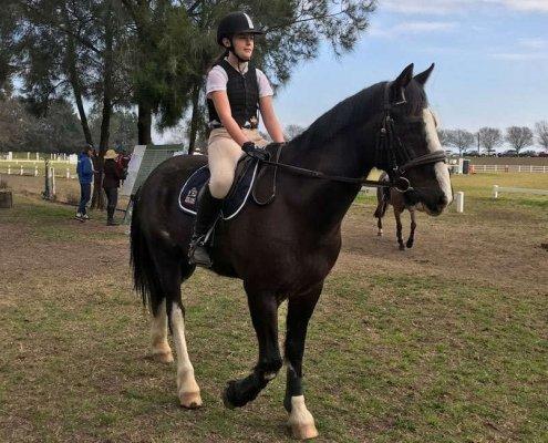 Horses/Ponies - Rodney2 image