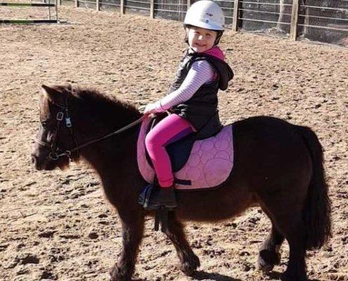 Horses/Ponies - TT Choco 1 image