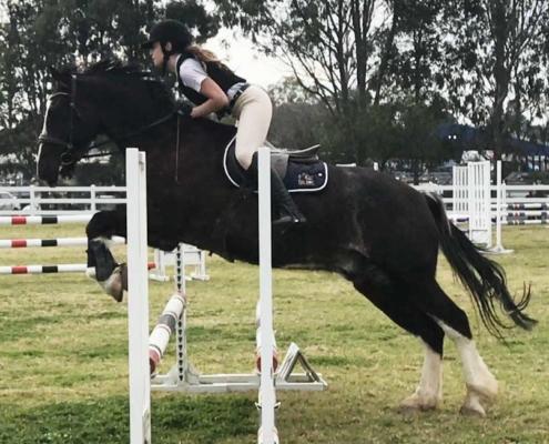 Horses/Ponies - TT Rodney image