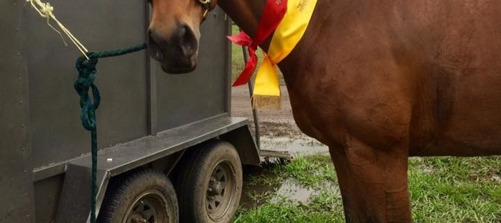 TT Sakido has done it again: Jumping in the mud at the Equine Lifestyle Festival
