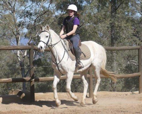 Horses/Ponies - TT Smokey 4 image