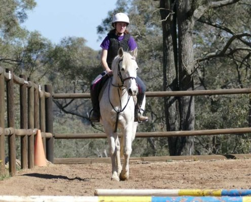 Horses/Ponies - TT Smokey image