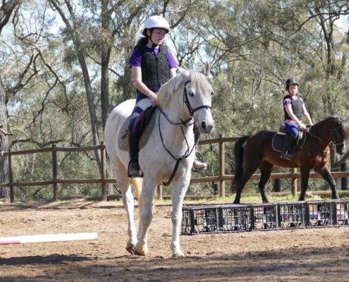 Horses/Ponies - TT Smokey2 image