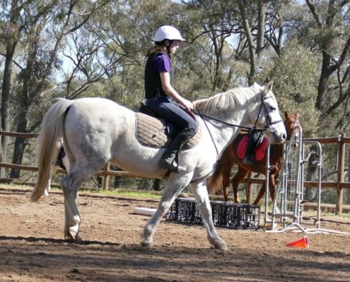 Horses/Ponies - TT Smokey3 image
