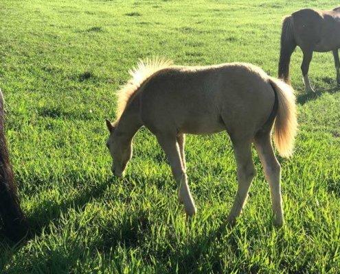 Horses/Ponies - TT Surprise image