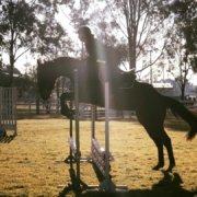 TT You Know You do has stepped up into the big world of Showjumping. - TT You Know You do image