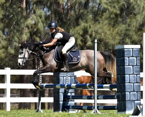 Horses/Ponies - TTEagle1 image