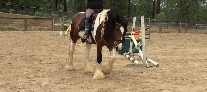"Third ride on her beautiful young Gipsy cob ""Ki"", Sam managed to take the challe"