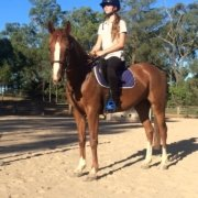 Tic Toc is proud to add another two fantastic horses to the team: TT Goldy and T