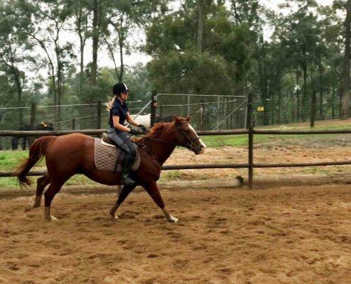 Horses/Ponies - cindy4 image