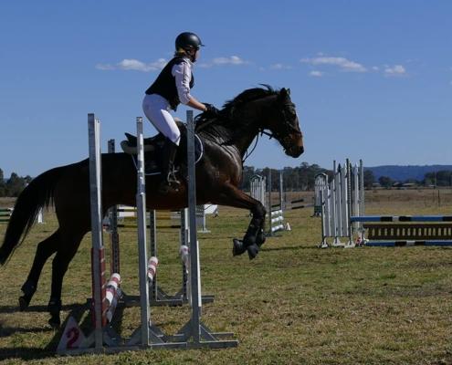 Past Horses/Ponies - Breeze1 image