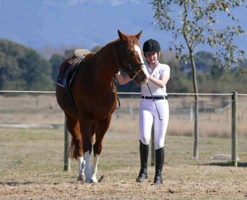 Horses/Ponies - TT Cindy image