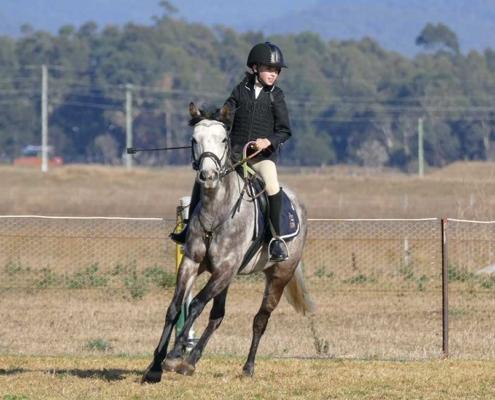 Horses/Ponies - TT Eagle1 image