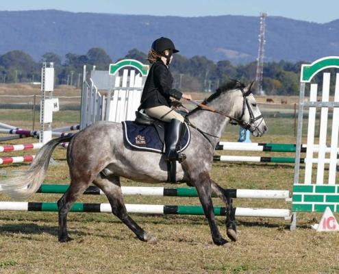 Horses/Ponies - TT Eagle2 image