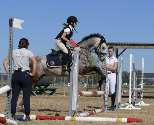 Horses/Ponies - TT Eagle3 image