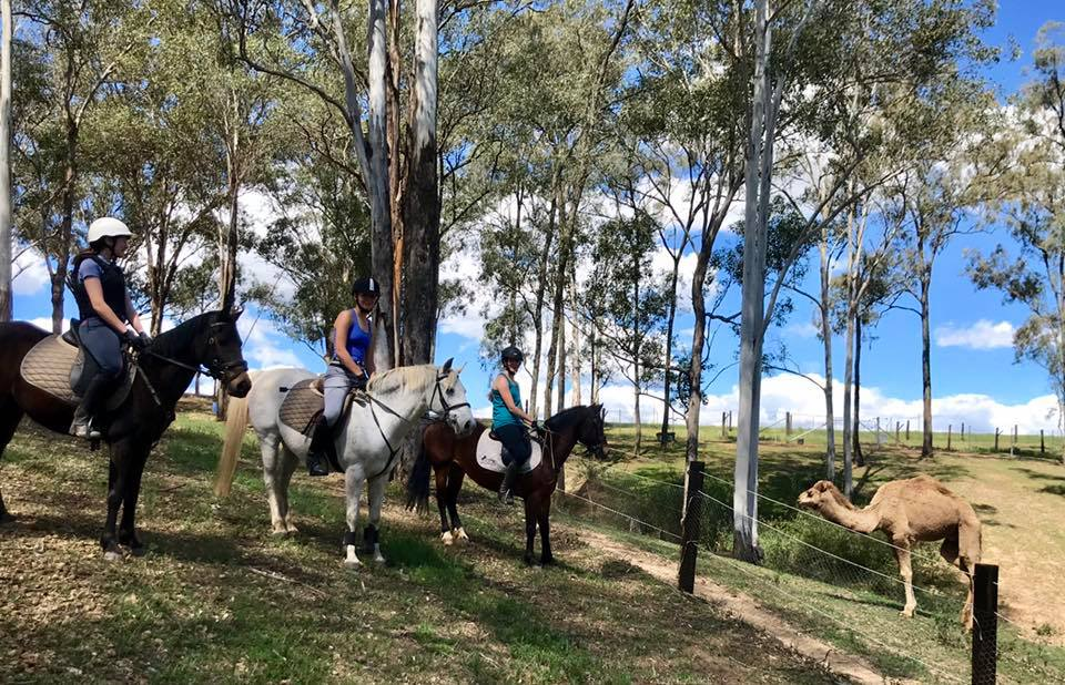 School Holiday Camps - Part 2 - The Showjumping Girls - School Holiday Camps Part 2 The Showjumping girls image