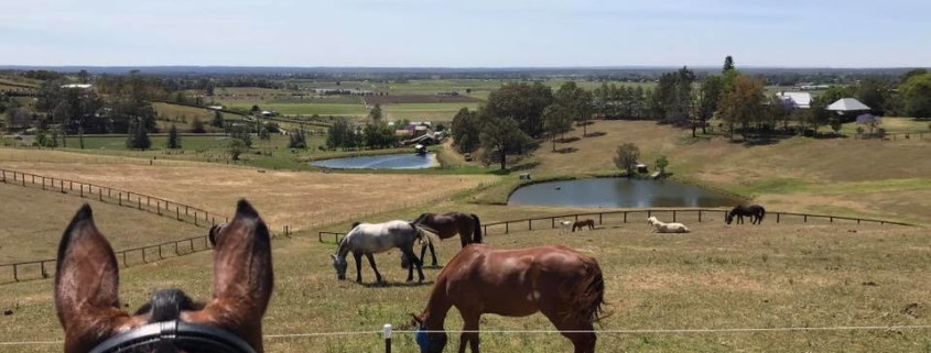 So far the view is clear, all our horses have moved into the big paddocks or yar