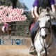 We would like to wish you all a Merry Christmas and safe holidays, from Sandra &