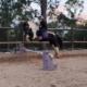 Someone said jumping? Summer and TT Thunder