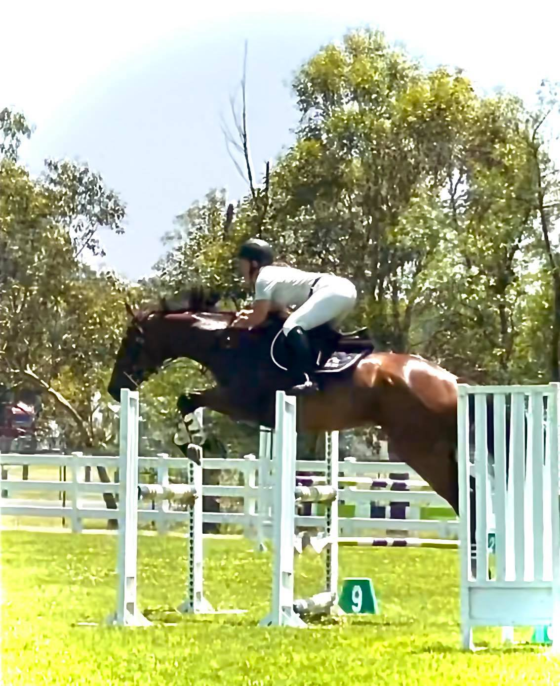 The Tic Toc Showjumping Team is on fire What a great day we had at the SSJC Sum - The Tic Toc Showjumping Team is on fire What a image