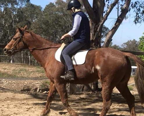 Horses/Ponies 22
