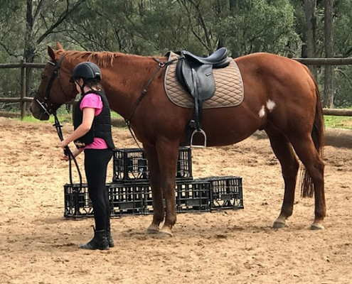 Horses/Ponies 25