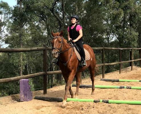 Horses/Ponies 26