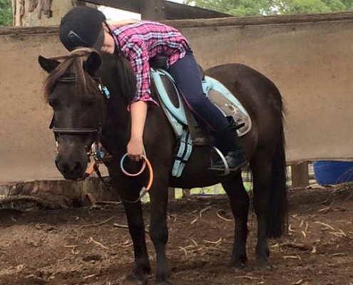 Horses/Ponies 60