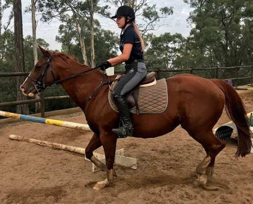 Horses/Ponies 34