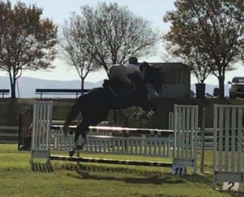 Horses/Ponies 3